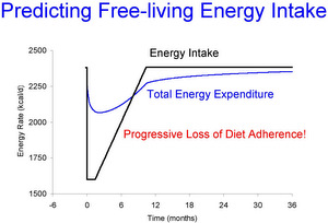 Energy intake, expenditure model