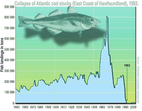 Graphic showing decline of cod fish stock