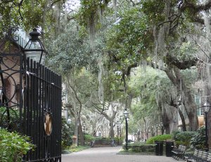 Trees on College of Charleston campus