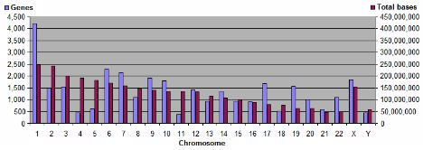 Graphic about human chromosomes