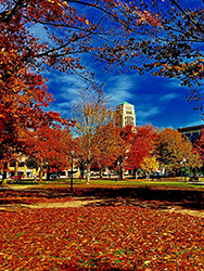 Fall colors on the Diag, University of Michigan campus.