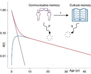 memory decay graph